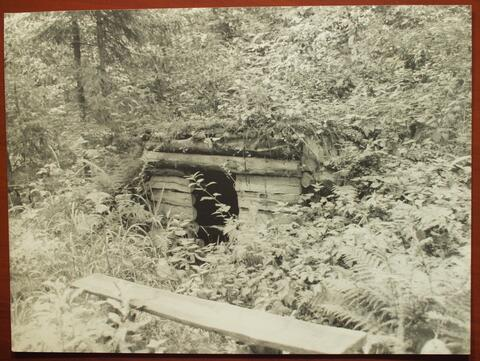 Riva Ginsburg  Picture- Forest Hiding Spot